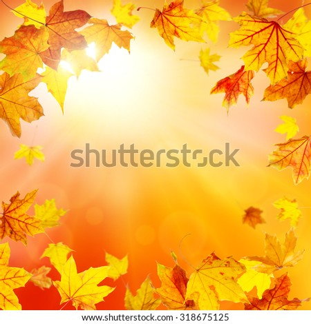 Autumn frame with falling maple leaves - stock photo