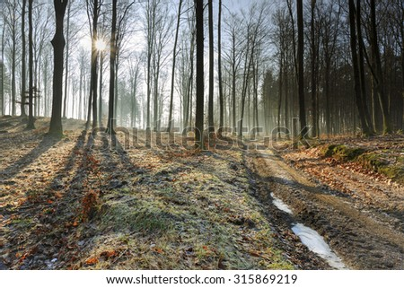Autumn Frost In Forest With Road.North Poland/ Autumn Frost  - stock photo