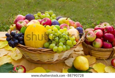 Autumn fruit - stock photo