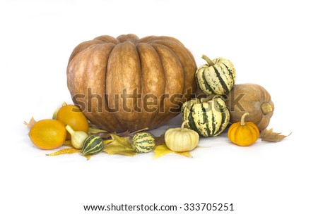 Autumn fruits and vegetable collection - stock photo