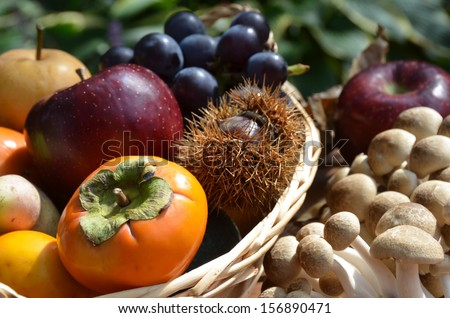 autumn fruits in basket with mushroom