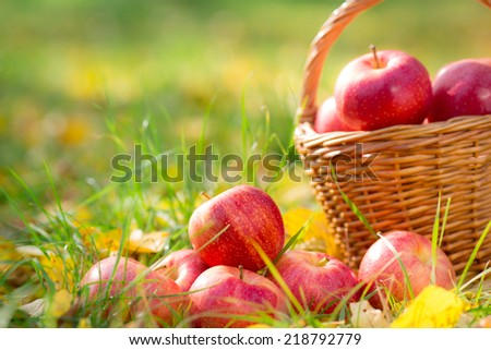 Autumn fruits outdoors. Basket of red apples. Thanksgiving holiday concept - stock photo
