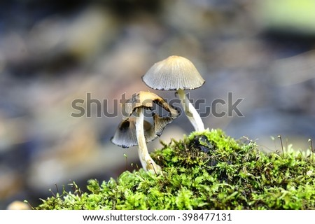 Autumn Fungi in the moss - stock photo