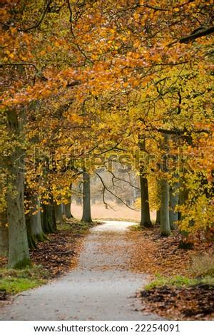 autumn gallery - stock photo