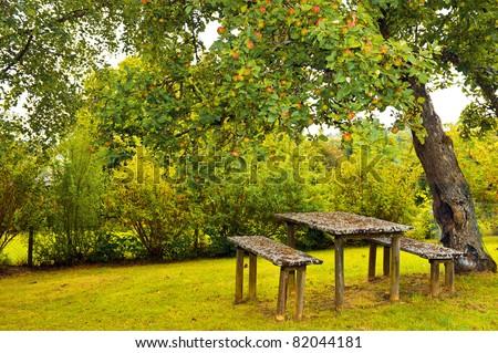 autumn garden. red apples on apple tree branch - stock photo