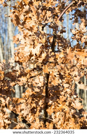 autumn gold colored leaves in bright sunlight in forest - stock photo