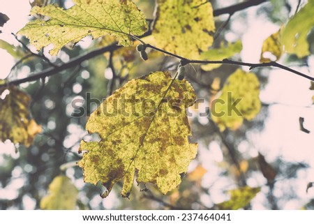 autumn gold colored leaves in bright sunlight in forest - retro, vintage style look - stock photo