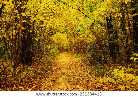 Autumn golden forest with path, natural fall vivid outdoor  background - stock photo