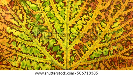 autumn grape vine plant leaf texture pattern background