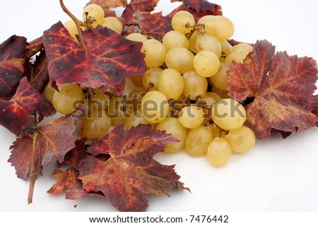 autumn grapes with red leaves as background