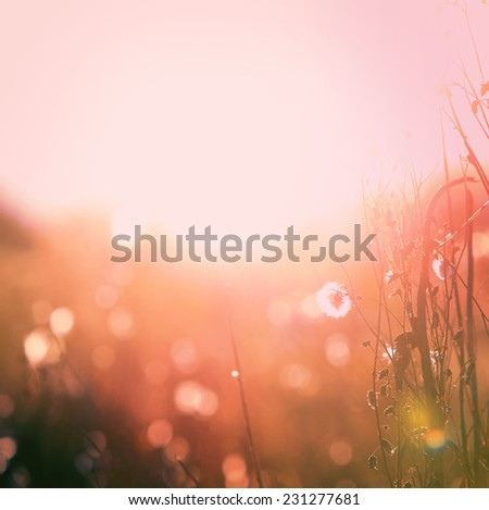 Autumn grass and wildflower background. Instagram effect - stock photo
