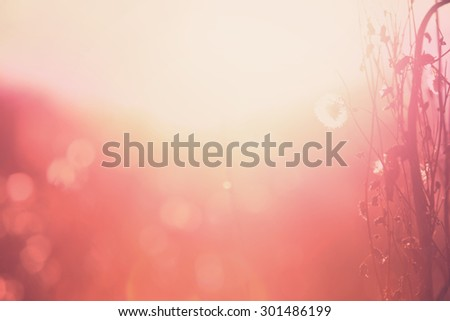 Autumn grass and wildflower background. instagram effect.  Shallow focus. - stock photo