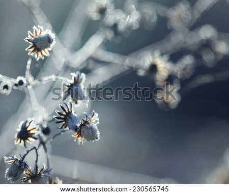 Autumn grass with ice in the rays of dawn - stock photo
