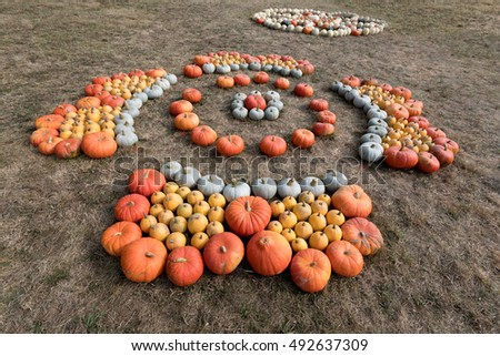 Autumn Halloween decoration. Various type and color of pumpkins as collection arranged on ground as ornament pleasing fall outdoor still life in autumn garden