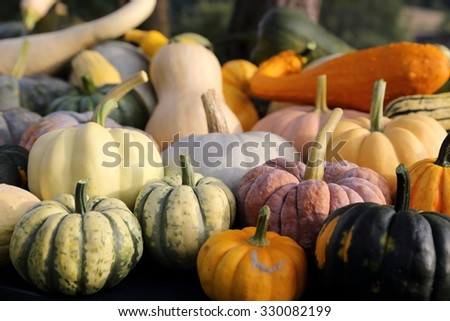 Autumn harvest colorful squashes and pumpkins in different varieties. - stock photo