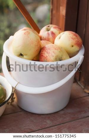 Autumn harvest of apples in white plastic bucket - stock photo