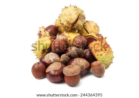 Autumn horse chestnuts and acorns isolated on white background - stock photo