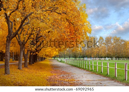 Autumn in a park - stock photo