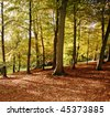 Autumn in an English Arboretum with Beech Trees and a carpet of fallen leaves - stock photo
