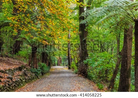 Autumn in Australia - empty footpath surrounded by yellow leaves and fern trees - stock photo