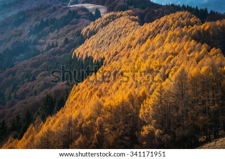 autumn in Baiului Mountains, Romania