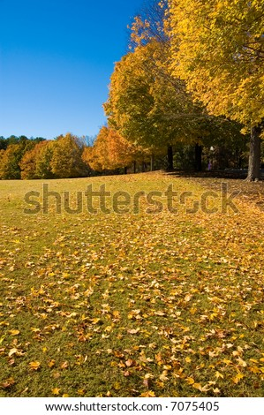 Autumn in Beautiful South Carolina. - stock photo