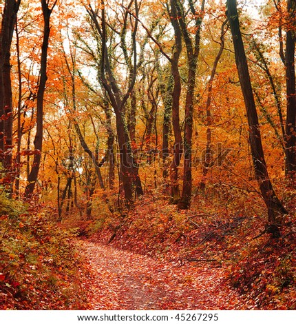 Autumn in forest - stock photo