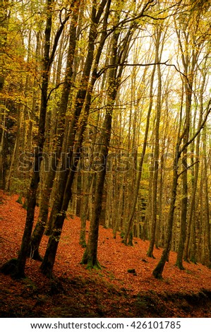 autumn in forest in tuscany mountains