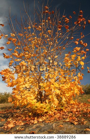 autumn in grounds, yellow leaves - stock photo