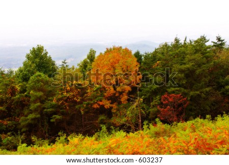 Autumn in mountains / Shenandoah National Park. Virginia