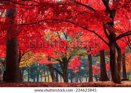 Autumn in Nami Island - stock photo