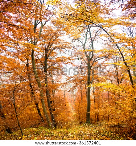 Autumn in south germany - stock photo