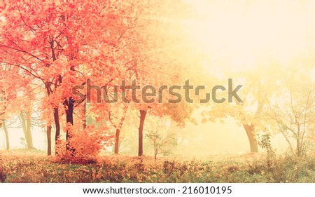 autumn in sunny forest, natural background with vintage effect - stock photo