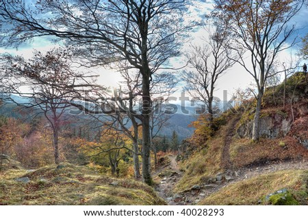 Autumn in the Black Forest, Germany - stock photo