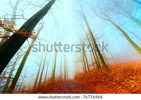 autumn  in the foggy  forest - stock photo