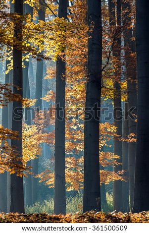 Autumn in the forest. - stock photo