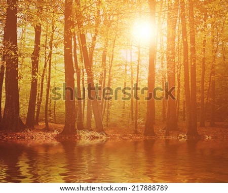 Autumn in the forest and river - stock photo