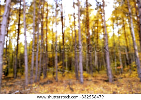 Autumn in the forest.Colorful autumn leaves.Abstract motion blurred trees in a forest.