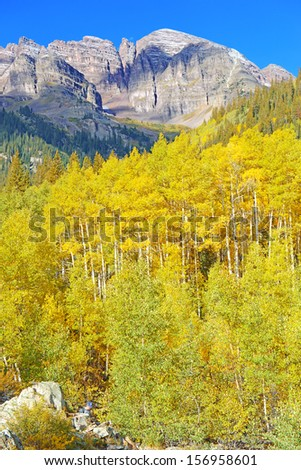 Autumn in the Forest: Golden Aspen in Fall Color with Mountains