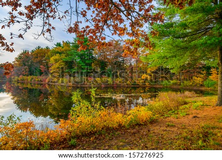 Autumn in the forest lake - stock photo