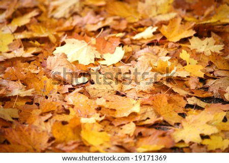 autumn in the forest with golden leaves on ground