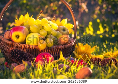 Autumn in the orchard: a basket of fresh fruit in the sunshine - stock photo