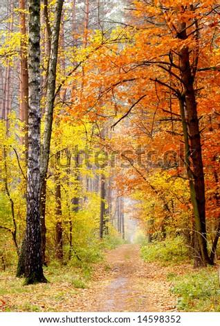 Autumn in the park - stock photo