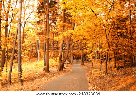 autumn in the park. gold-covered trees - stock photo