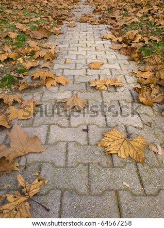 autumn in the park, leaves on the road
