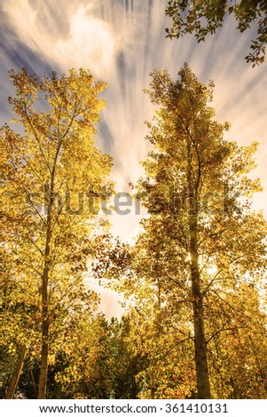 autumn in the trees - stock photo