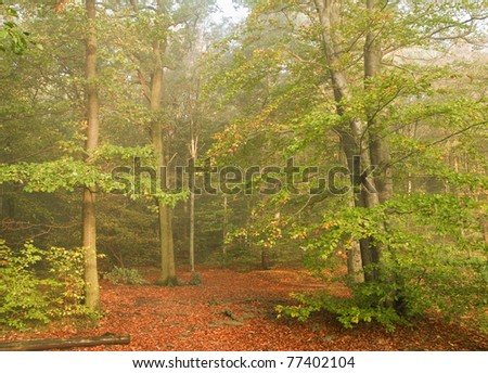 autumn in the wood