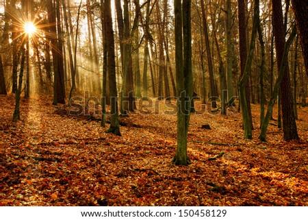 Autumn in Warmia - stock photo