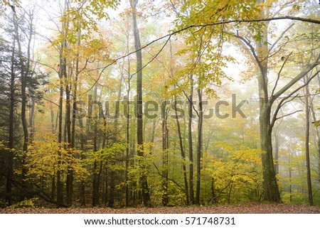 autumn in west virginia forest with mist