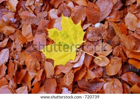 autumn individualist - stock photo